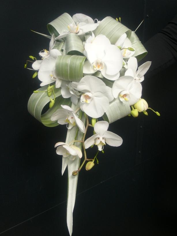 teardrop-white-phalaenopsis-astelia-white-singapore-buds
